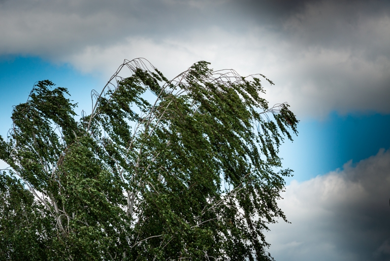 Метеопредупреждение: в Тульской области ожидаются грозы