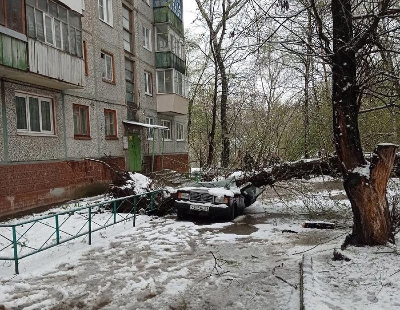 В Туле упавшее дерево раздавило автомобиль