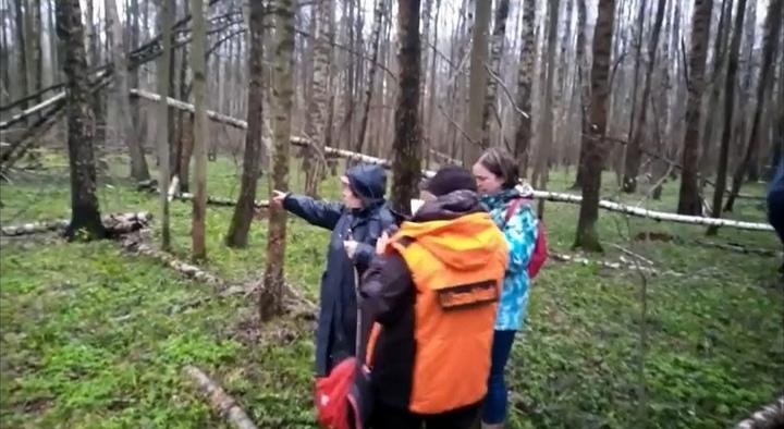 В Туле бабушка пошла за черемшой и потерялась в лесу