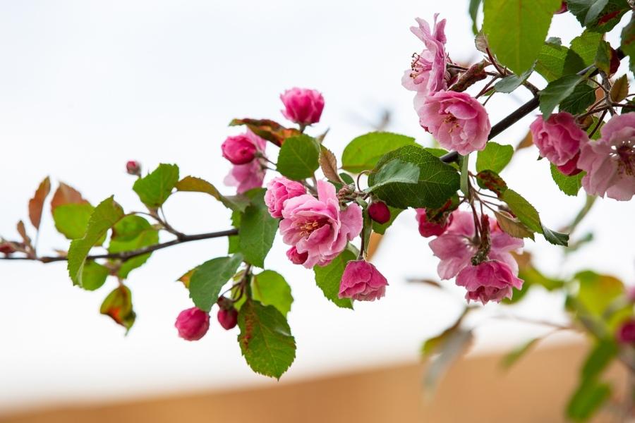 В Тульском кремле прошла благотворительная акция «Белый цветок»