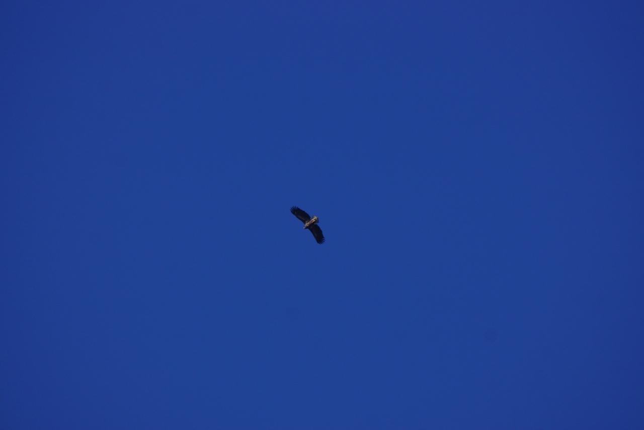 В Тульской области заметили редчайшую краснокнижную птицу