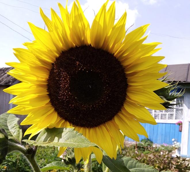 Последняя пятница лета: публикуем прогноз погоды в Туле на 27 августа