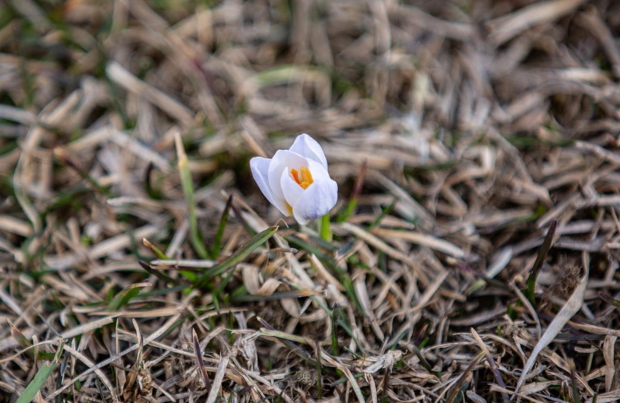 12 апреля температура в воздуха в Туле может прогреться до +17 градусов