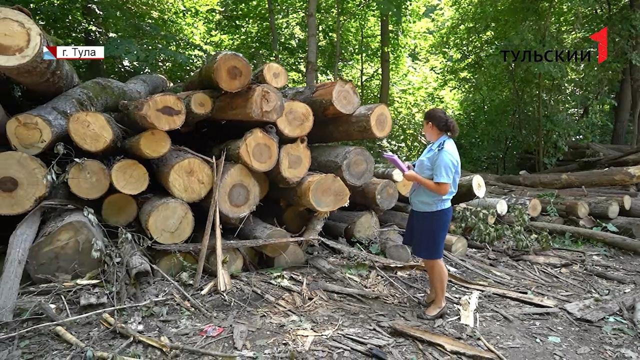 Преступление или честный бизнес: надзорные органы проверяют законность вырубки леса в Туле