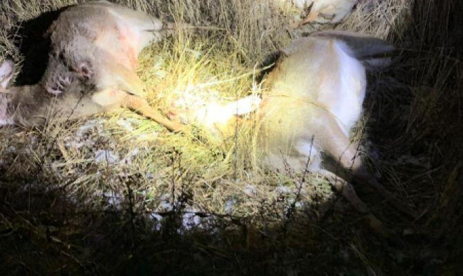 Туляк в Калуге расстрелял лосей, оленей и косулю