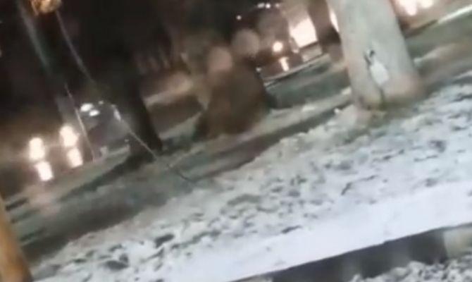 В Туле провод под напряжением упал на землю
