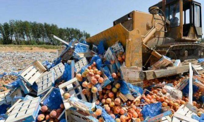 В России уничтожено более 1000 тонн контрафактной продукции