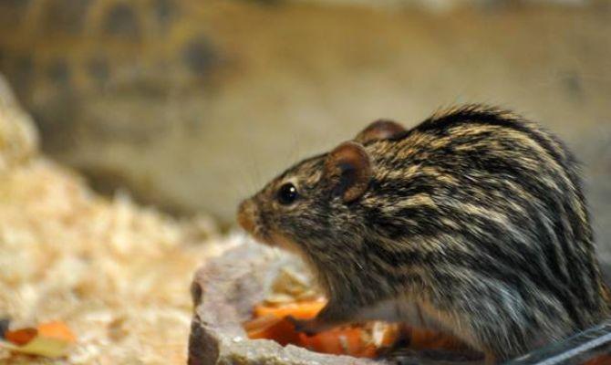 В Тульском экзотариуме работает выставка необычных домашних животных