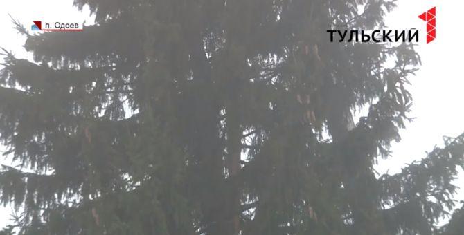 Не в печку, а на площадь: в Одоеве установили главную новогоднюю елку