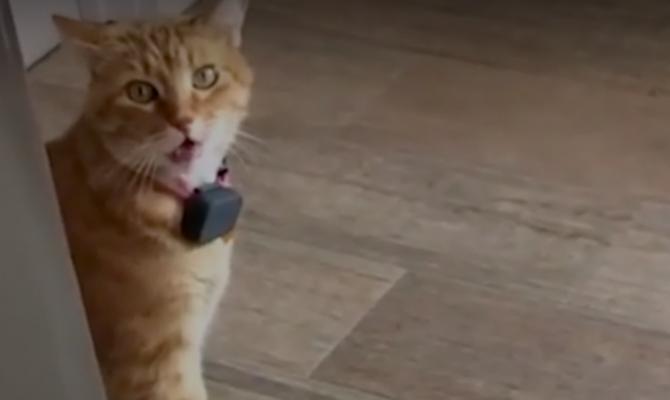 Пользователей соцсетей покорил говорящий кот